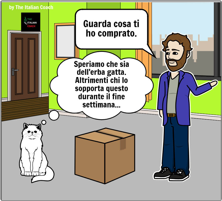 The Italian Coach cat comic