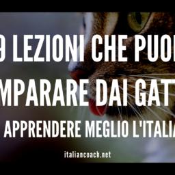 #071 9 lezioni che puoi imparare dai gatti (per apprendere meglio l'italiano)
